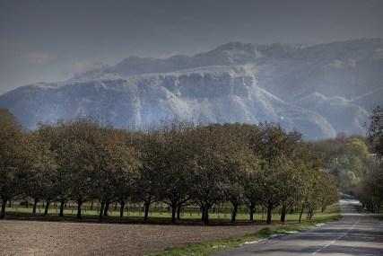 Champs de noix de grenoble et montagne