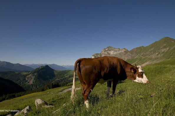 Fromages de Savoie - Les alpages