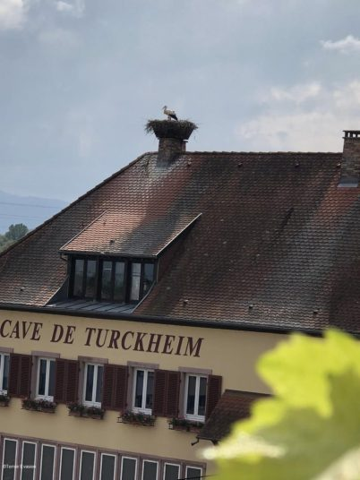 Alsace Cave de Turckheim Terroir Evasion