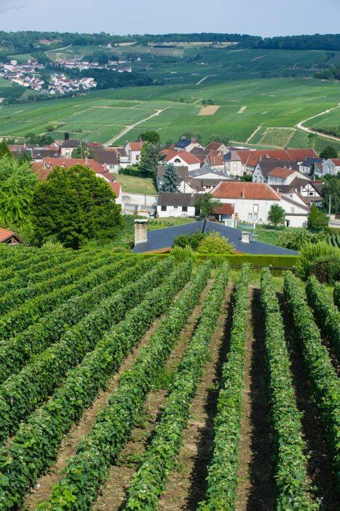 ChampagneTribaut Schloesser Vignes Axel Coeuret