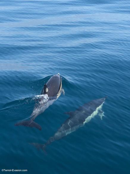 Le Lavandou - Sur la route des iles les dauphins