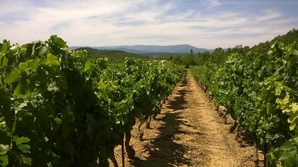 Les vins d'Ardèche - Vue Cirque de Gens - Vignoble
