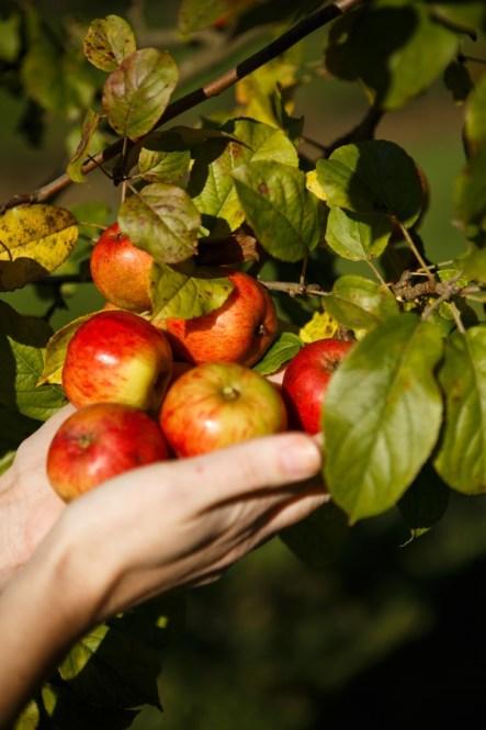 Calvados Père Magloire -Pommes à Calva