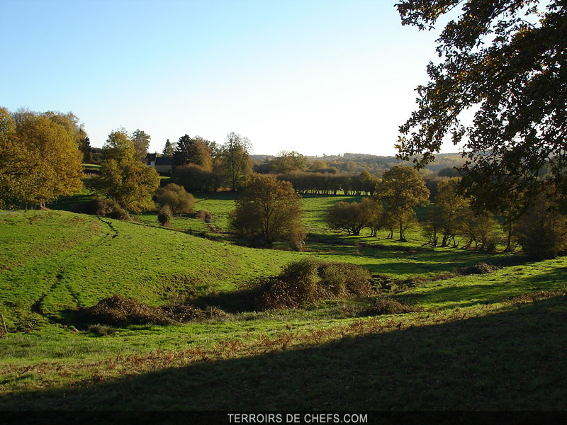 Limousin Terre dlevages