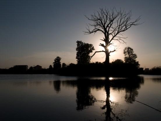 Tree, Mogosoaia Lake, Romania