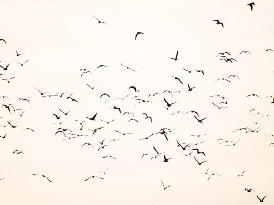 Birds, Bucharest, Romania