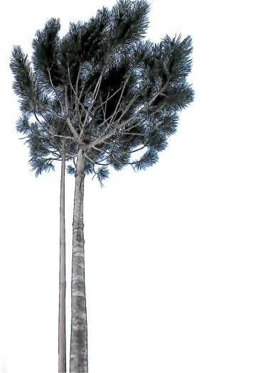 Tree, Bucharest, Romania