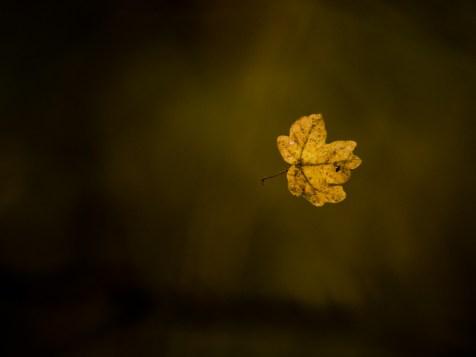 Leaf suspended in a spider wire, Ilfov, Romania