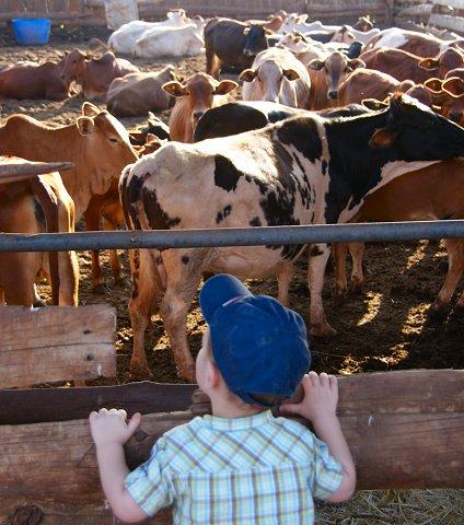 Boer Julian bij de koeien van Boer zoekt vrouw
