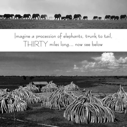 elephants worth more alive