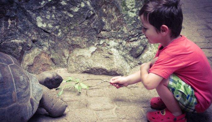Julian met reuzeschildpad