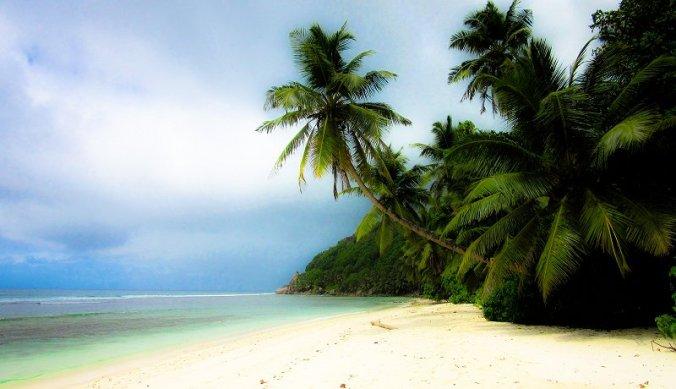 Strand en palmbomen Seychellen