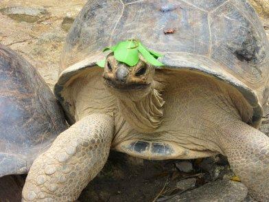 Wildlife op de Seychellen