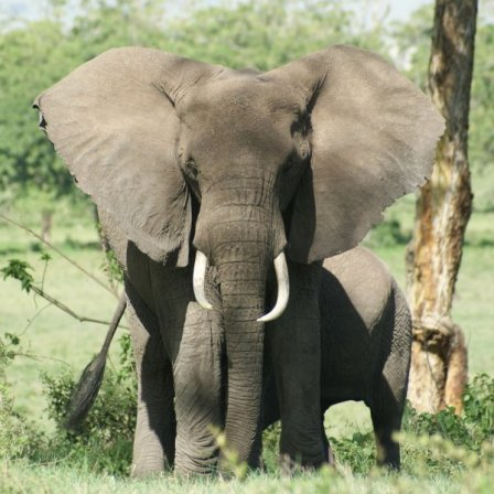 Olifanten in Ngorongoro Crater