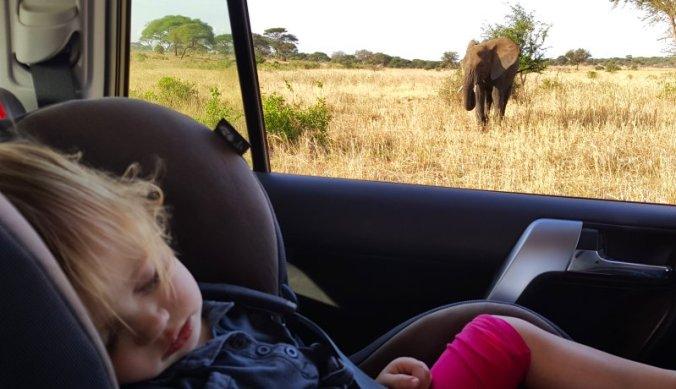 Zelfs een olifant is niet meer indrukwekkend genoeg om voor wakker te blijven