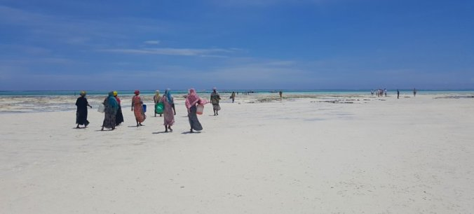 Lokale vrouwen gaan vissen op Zanzibar