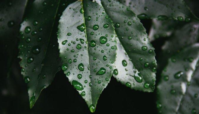 Regen in Tanzania, een zegen of ramp