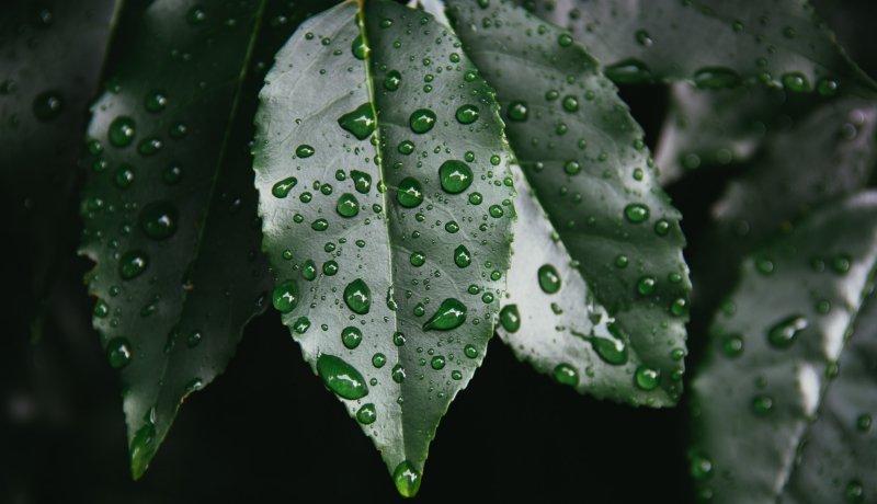 Het jaarlijkse regenseizoen; een zegen of een ramp