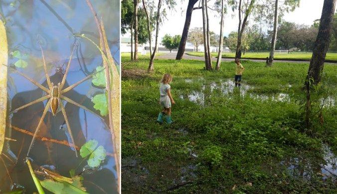 Kikkervisjes en spinnen zoeken na flinke regenval