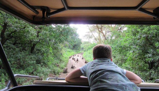 Bavianen op de weg tijdens safari in Lake Manyara