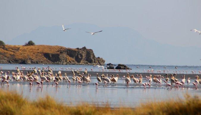 Zoutmeer Lake Natron met flamingo's en pelikanen