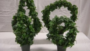 Angel Ivy Ring Topiary