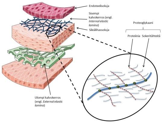 proteoglykaani_sijainti_ja_rakenne
