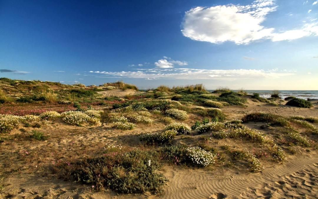 Fiumicino, a Passoscuro rubati i cartelli delle dune