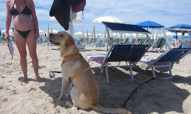 Tarquinia Lido, la Guardia Costiera impone: stabilimenti vietati ai cani, solo spiaggia libera (con le siringhe)