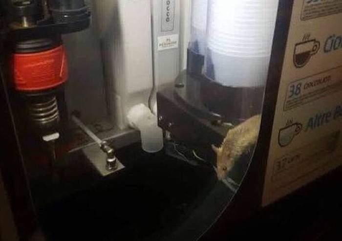 Stazione Termini, topo nel distributore del caffè: la denuncia di Pedica (Pd)