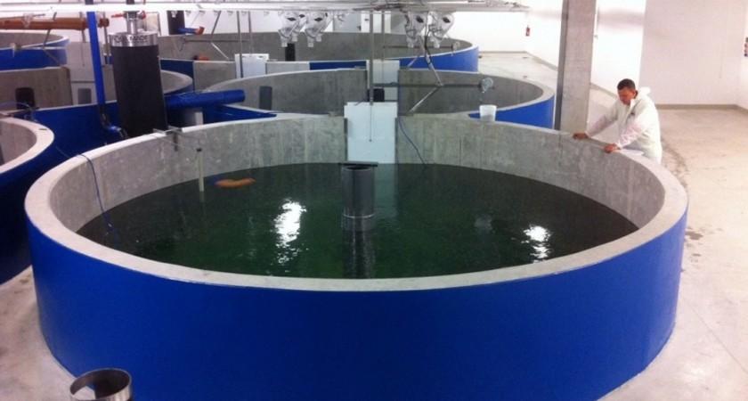 Eritrean Scientist Fish-Farm-Projects-Aquaculture