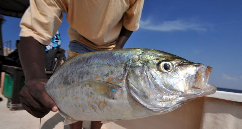 Eritrea's Unexploited Fishing Treasures: Challenges and Opportunities