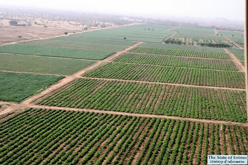 Gerset Farm, in Gash Barka region of Eritrea