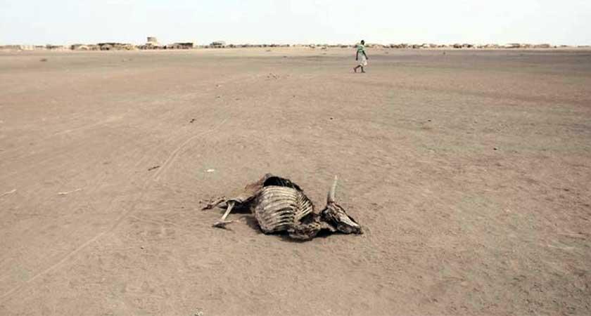 New Drought Strikes Millions in Ethiopia