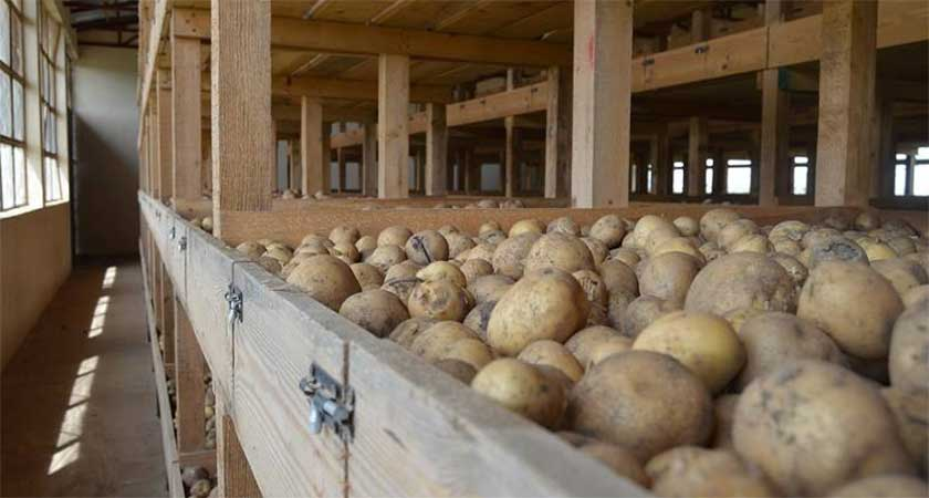The Potato Seed Store in Mendefera