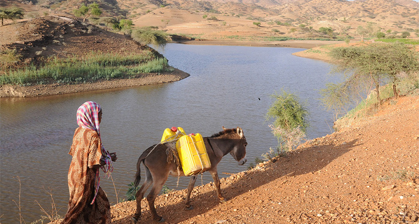 Oases of Eritrea: Nature-Based Solutions for Development