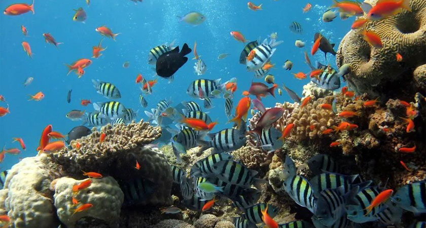 The Eritrean Red Sea coast offers some of the finest snorkeling and scuba diving in the world.