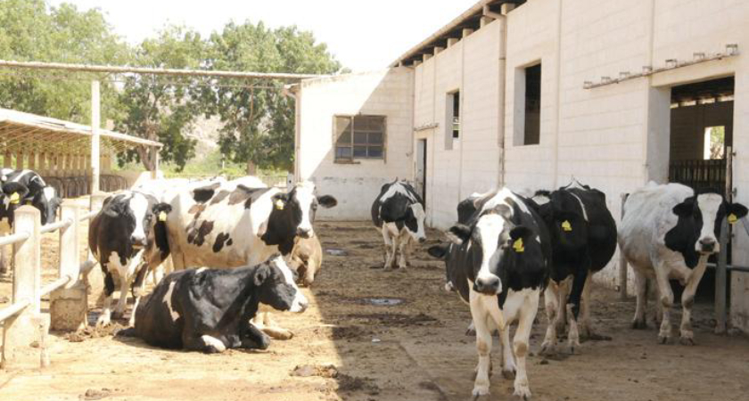 Eritrea Introduces Minimum Integrated Household Agricultural Package (MIHAP)