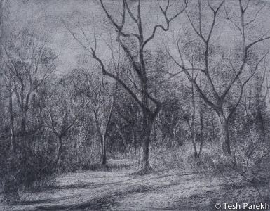 Waiting for the spring. 11x14.25 Drawing. Graphite on paper.
