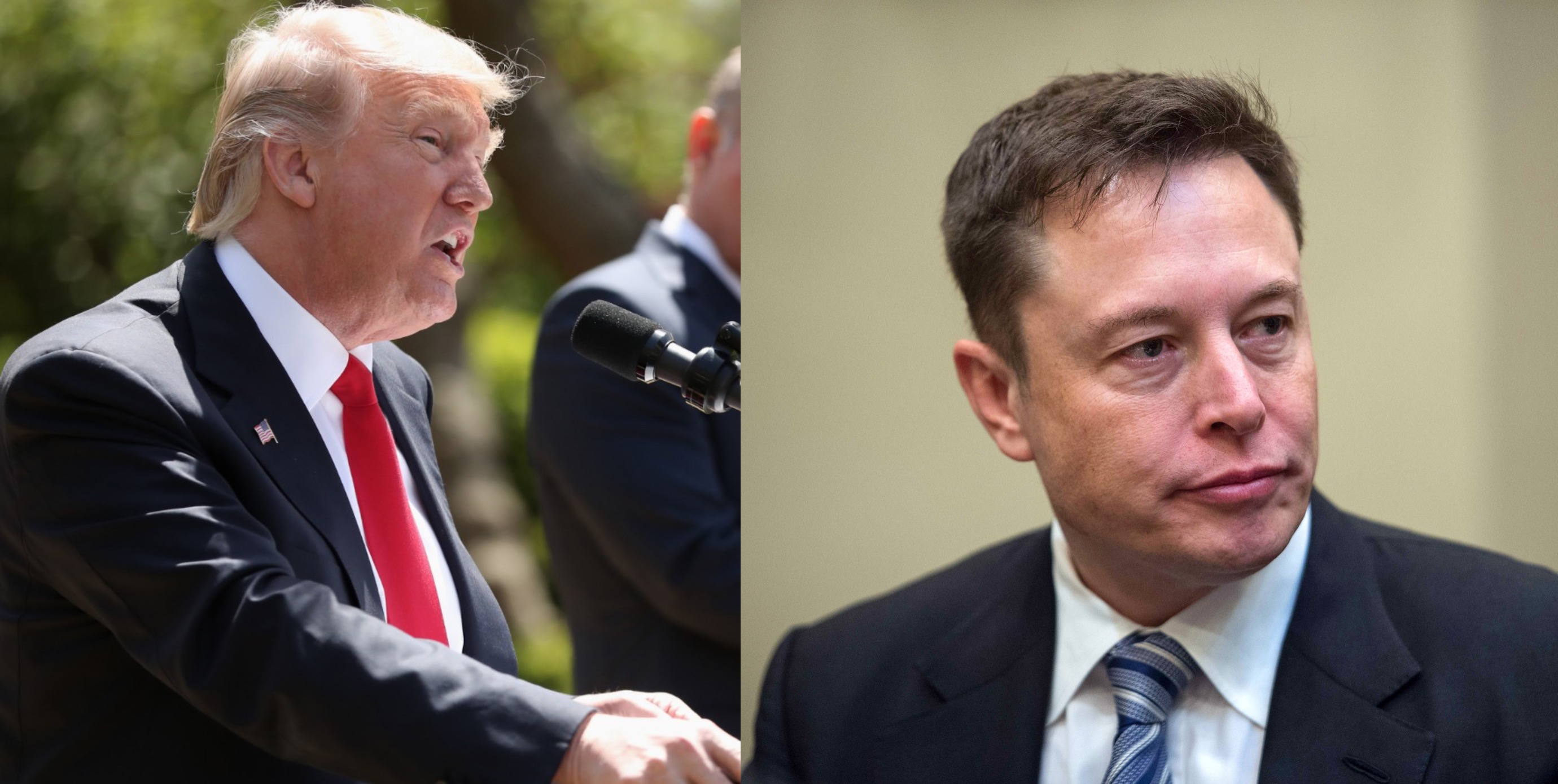 Elon Musk led the way. now Trump's council is completely wiped out