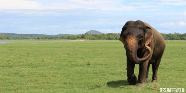 olifantalleen