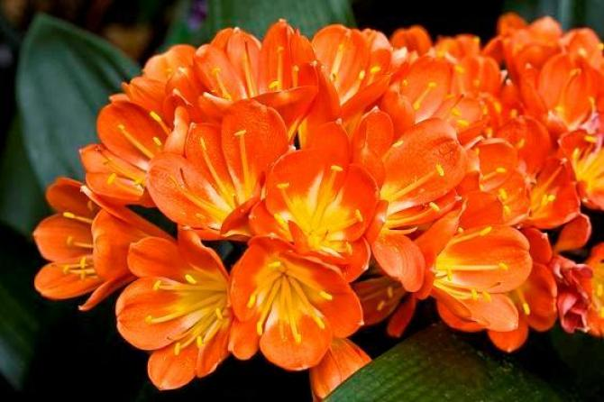 Zdjęcie pożyczone ze strony www.swiatkwiatow.pl