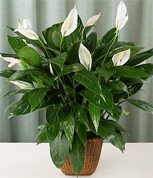 Zdjęcie pożyczone ze strony www.projektoskop.pl