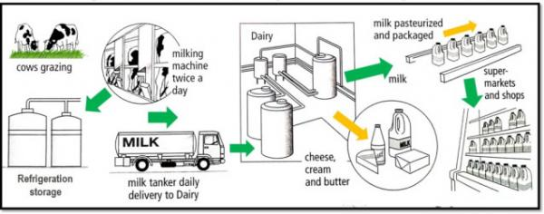 The diagram below shows the production and processing of