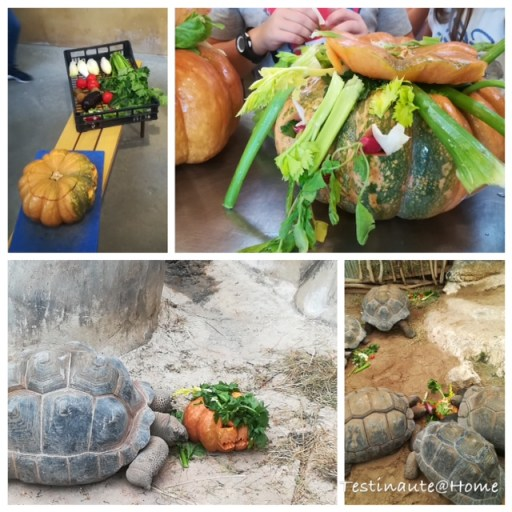 nourrissage spécial halloween pour les tortues de la ferme aux crocodiles