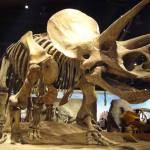 Crazy things evolutionary scientists say