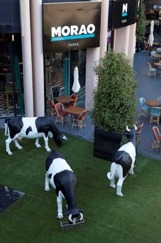 Morao tapas terraza Te Veo en Madrid