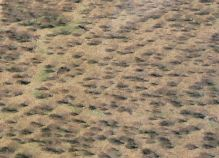...a field of scrub brush...