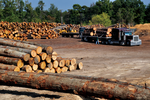 Logs awaiting processing at a sawmill in Nacogdoches County, Texas - Ron Billings photo