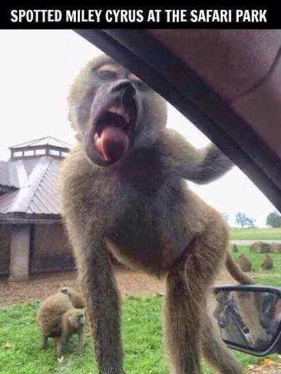 miley-cyrus-at-safari-park